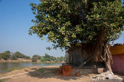 Day 12 - Buva. Day halt under Banyon tree. The Salt March Route, 2014, Gujarat, India.