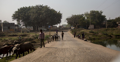 The Salt March Route, 2014, Gujarat, India.